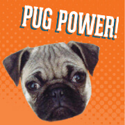 Join the Pugs - Pug Power