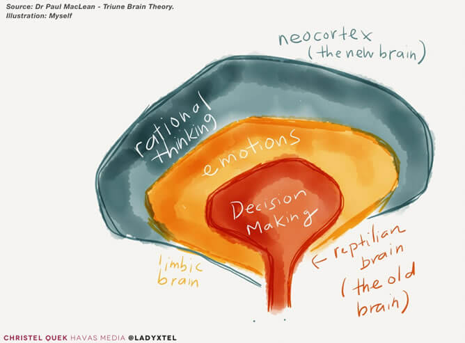 Credit Christel Quek and the Huffington Post - Limbic Brain Decision making