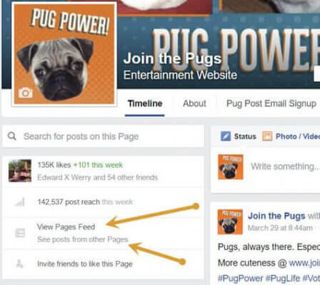How to see your Facebook Page Feed