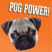 Pug Power Dog Days are Over