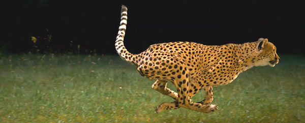 WordPress Optimization by Spencer Taylor is Cheetah fast